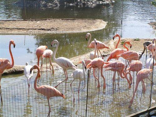 Ukranian Flamingos