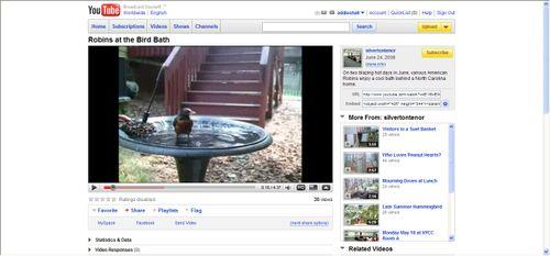 Robins at the Bird Bath video