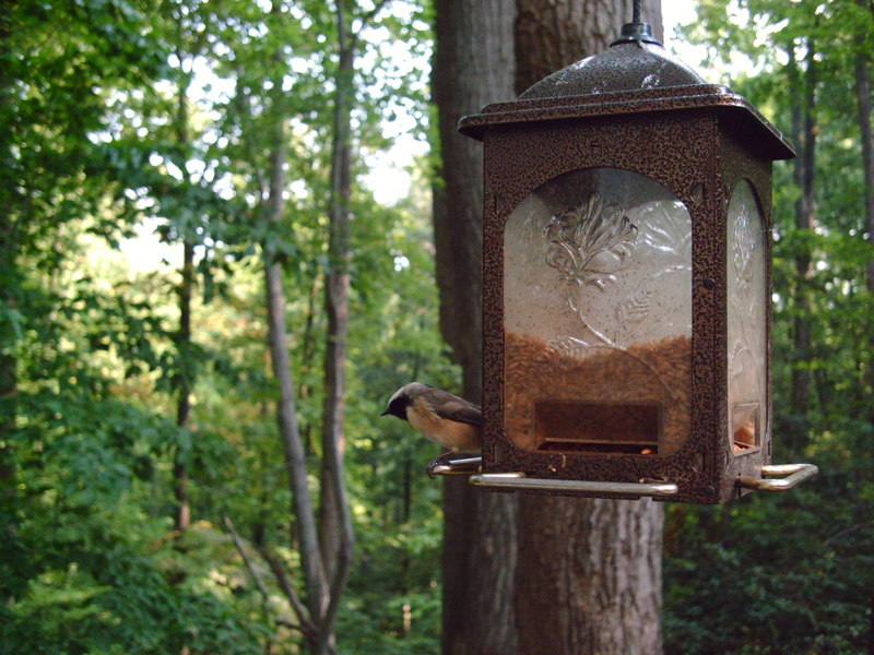Birdcam92807024