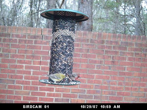 Birdcam012208_018