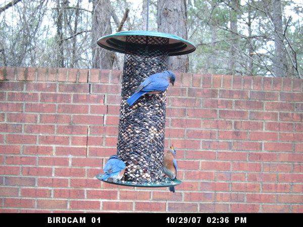 Birdcam012208_078