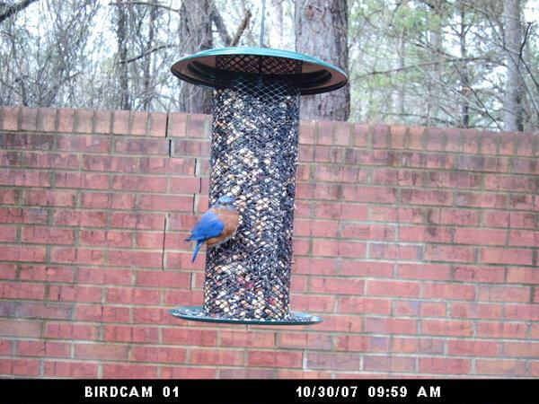 Birdcam012308_050_2