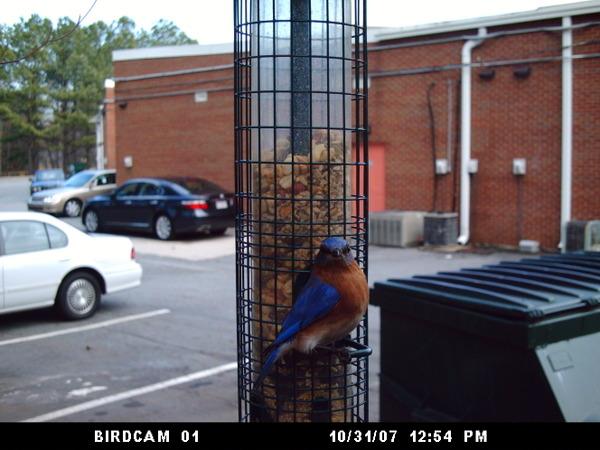 Birdcam012408_051