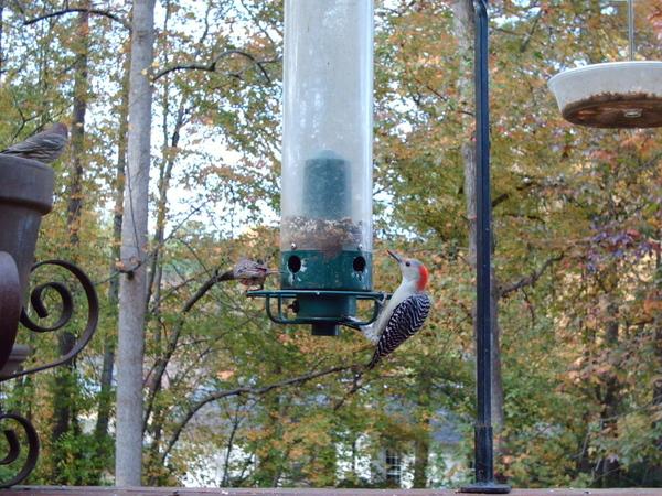 Birdcam1118_049