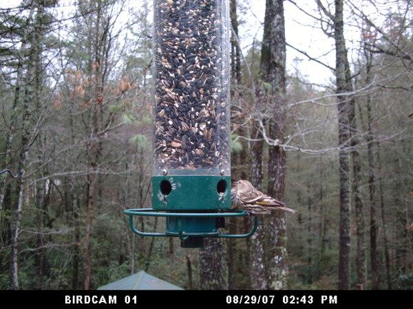 Birdcam1122b_065