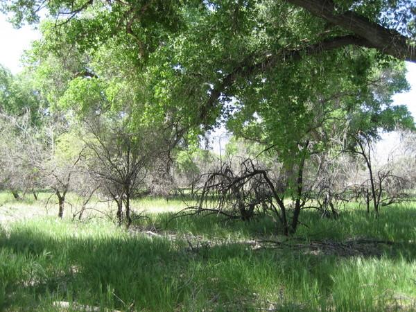 Cottonwood_verde_valley_2008